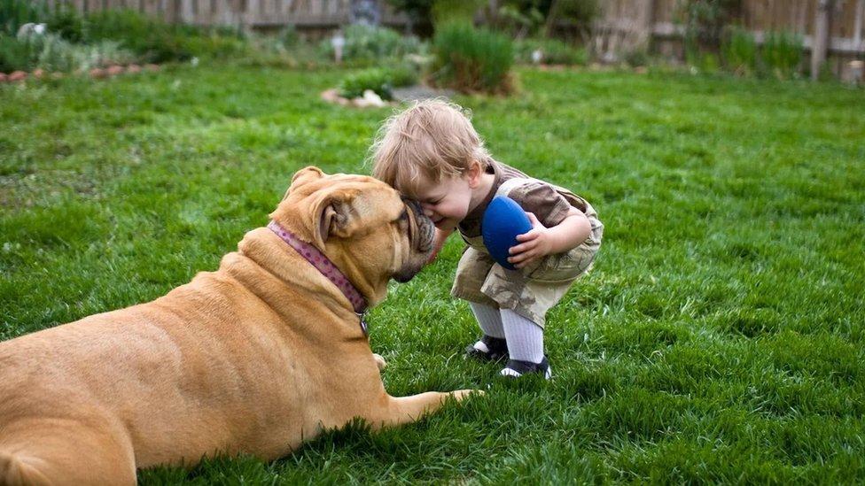طفل يلعب مع كلب