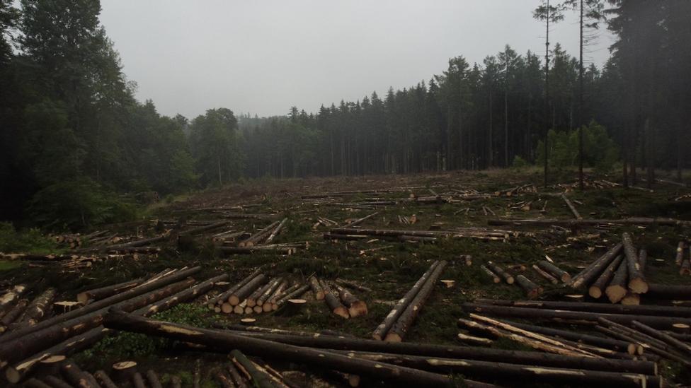 يُعزى إلى تغير المناخ الدمار الذي أحدثته خنفساء اللحاء في منطقة هارتس